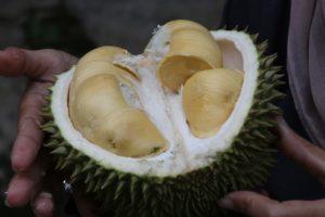 シンガポール食文化には欠かすことの出来ないドリアン