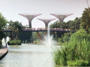 Meadow Bridgeから満たスーパーツリー